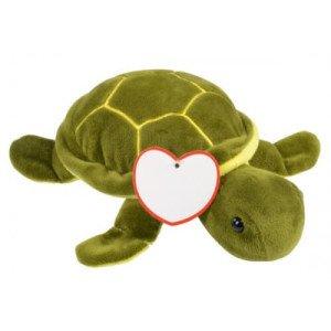 Albert korytnačka